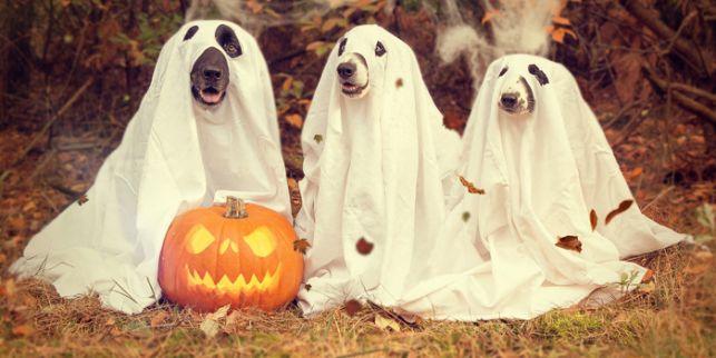 Świetna zabawa czy głupia moda, czyli co bełchatowianie sądzą o Halloween?  - Zdjęcie główne