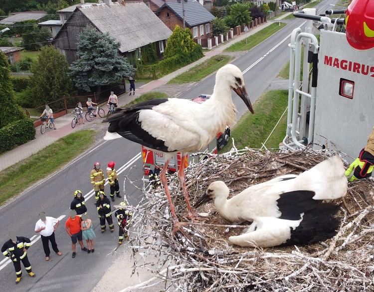 Strażacy ratowali bociany w gminie Drużbice. Potrzebny był wóz z drabiną [FOTO] - Zdjęcie główne