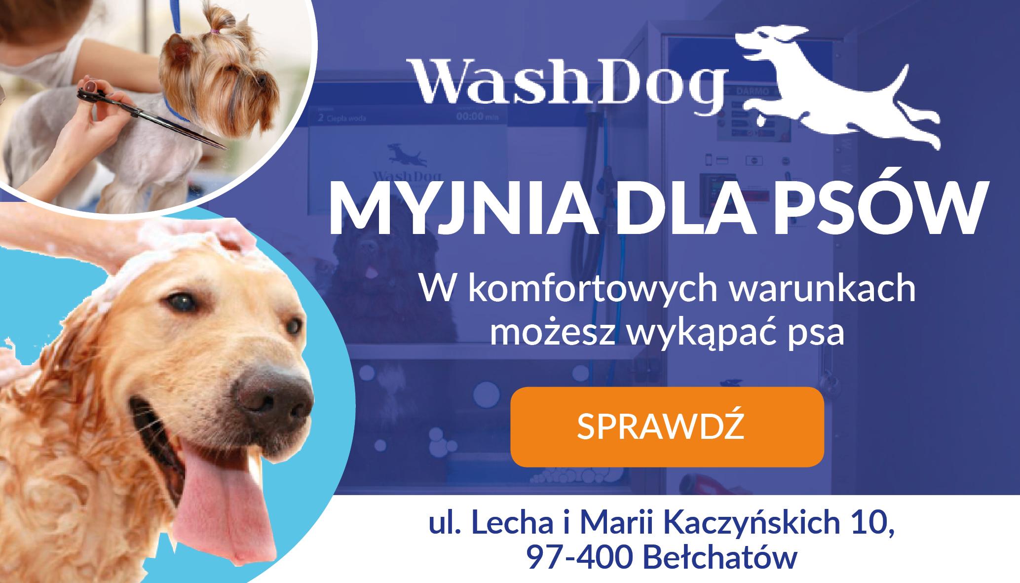 Salon Wash Dog Bełchatów, czyli komfort dla Twojego psa! - Zdjęcie główne