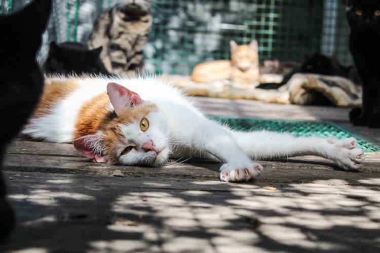 Kilkadziesiąt kotów z bełchatowskiego schroniska szuka domu. Jak przygarnąć zwierzaka? [FOTO] - Zdjęcie główne