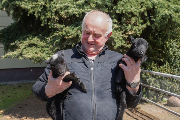 Baranek i owieczka przyszły na świat w bełchatowskiej parafii. Rodzeństwo już podbiło serca dzieci - Zdjęcie główne