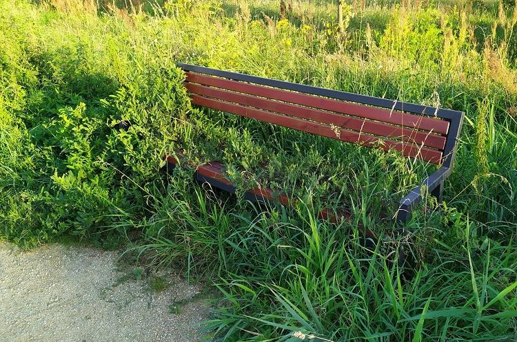Ławka zarośnięta pokrzywami, po bełchatowskich alejkach spaceruje się jak w ''dżungli'' [FOTO] - Zdjęcie główne