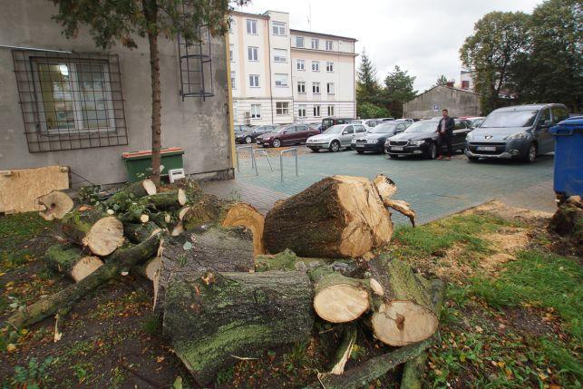 Ale wieje! Drzewo runęło przed Urzędem Miasta, inne spadło na samochód. Zerwane dachy i linie energetyczne - Zdjęcie główne