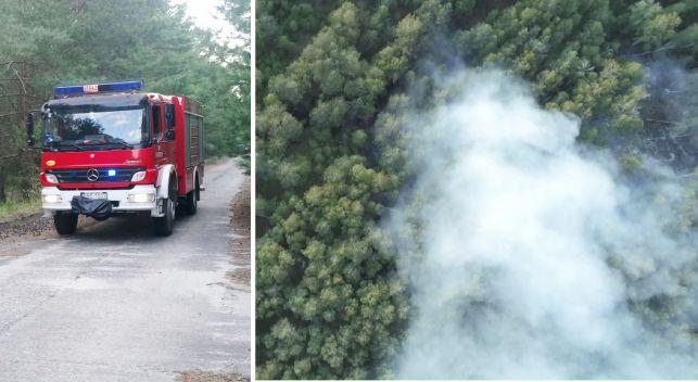 Pożar lasu w okolicy elektrowni. Strażaków wspierał samolot gaśniczy. Akcja trwa... [VIDEO] - Zdjęcie główne