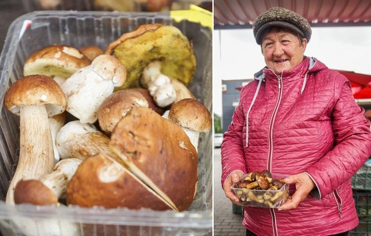 Grzybiarze na targowisku w Bełchatowie. Ile trzeba zapłacić za prawdziwki, podgrzybki i kurki? [FOTO] - Zdjęcie główne