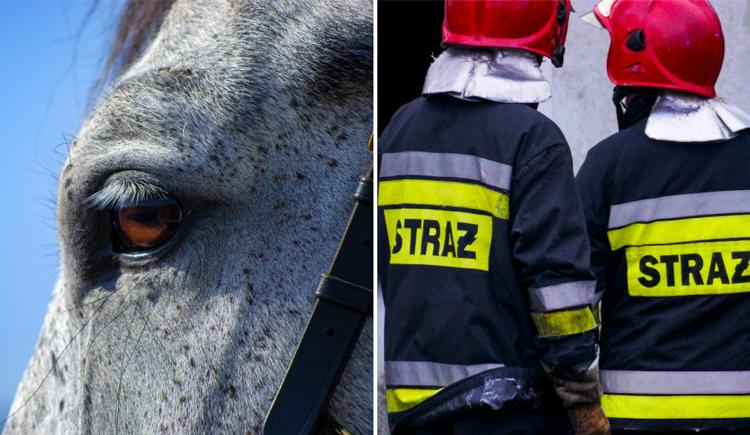 Zwierzę mogło zginąć. Interweniowali strażacy z Bełchatowa - Zdjęcie główne