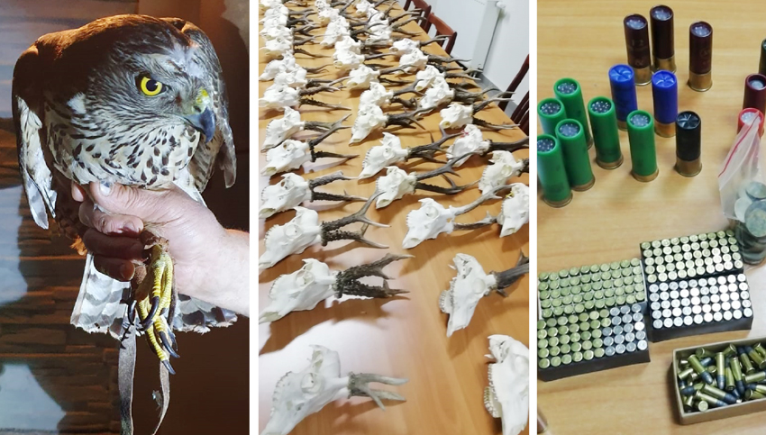 Znaleźli dziesiątki czaszek, broń i uwięzionego jastrzębia. Przyjechali tylko... po skradzioną kamerę - Zdjęcie główne
