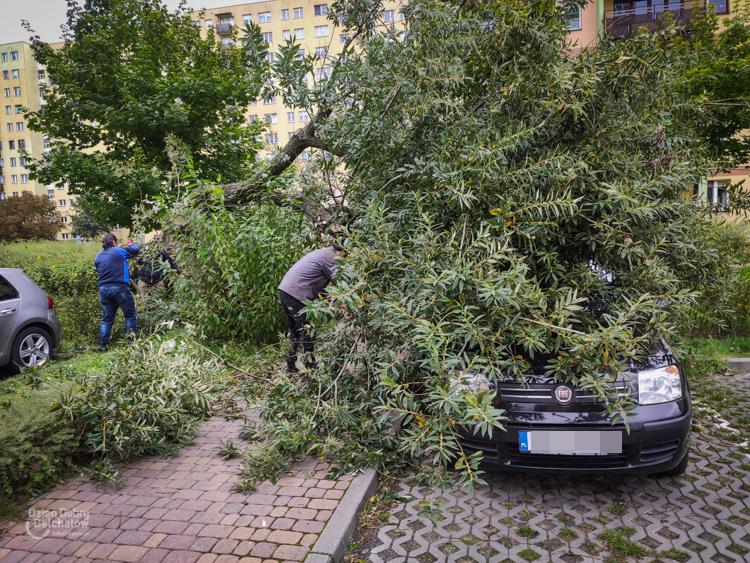 Silny wiatr łamał drzewa w Bełchatowie i okolicy. Mieszkańcy i strażacy usuwali skutki wichury  - Zdjęcie główne