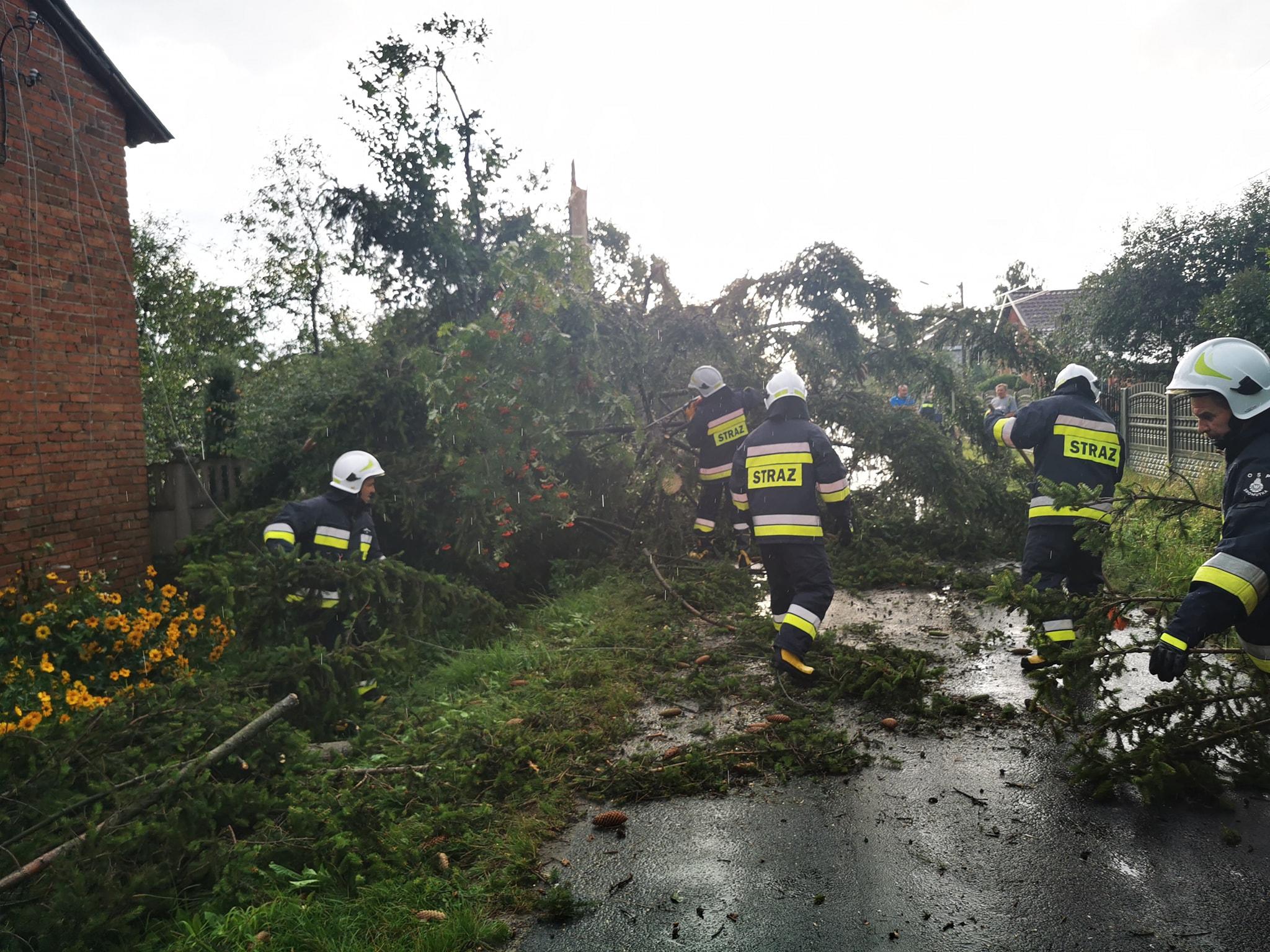 Porywisty wiatr łamał drzewa i gałęzie. Strażacy interweniowali w całym powiecie bełchatowskim [FOTO] - Zdjęcie główne