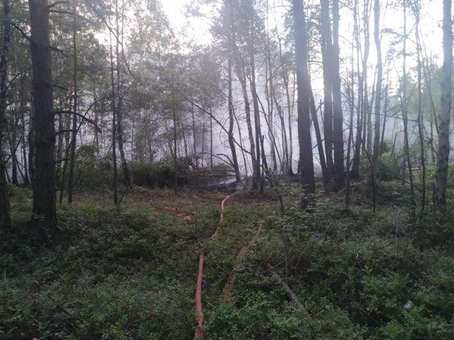 Piąty dzień walki z pożarem lasu w Bogumiłowie. Strażacy pokazali zdjęcia z akcji [FOTO] - Zdjęcie główne