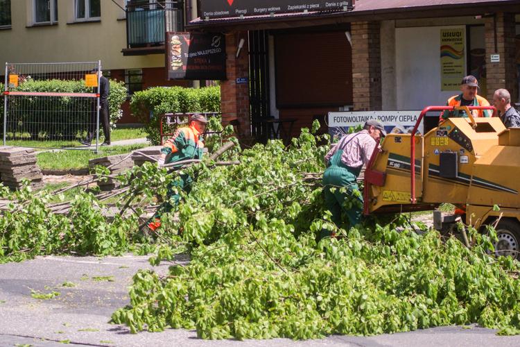 Wytną kilkanaście drzew w centrum Bełchatowa. ''Rosną w planowanym pasie drogi'' - Zdjęcie główne
