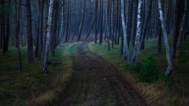 Tragiczny finał poszukiwań 87-latki z powiatu bełchatowskiego - Zdjęcie główne