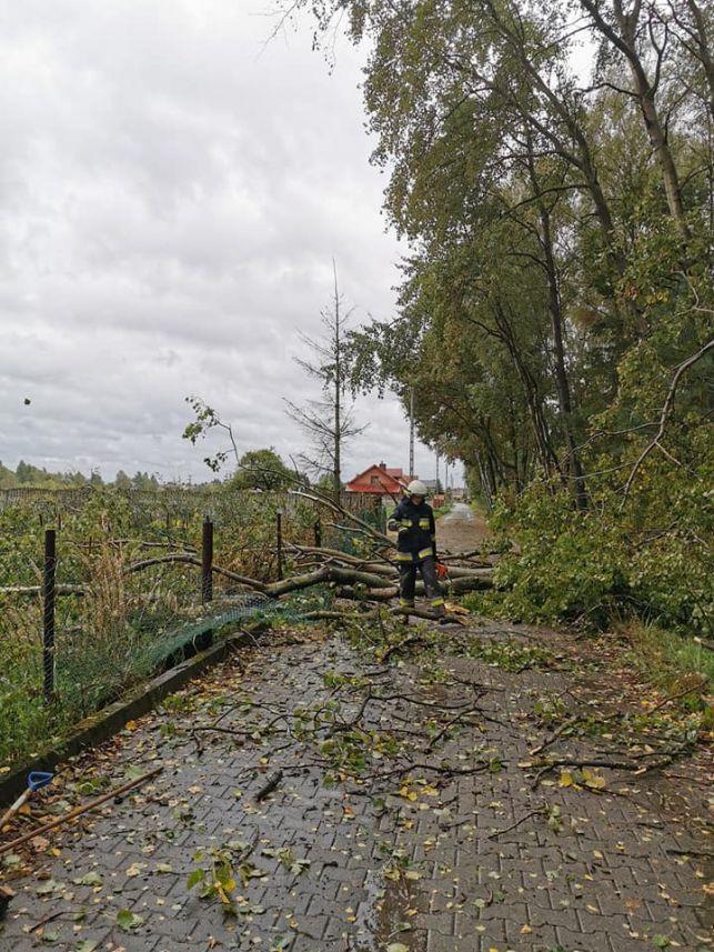 Zerwane dachy, powalone drzewa, 50 interwencji strażaków. Tak wyglądają skutki wczorajszej wichury w powiecie bełchatowskim [FOTO] - Zdjęcie główne