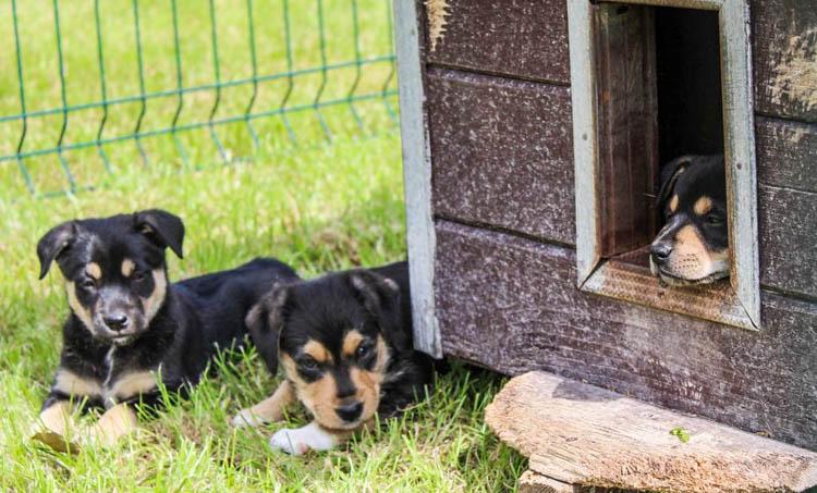 Słodkie szczeniaczki czekają na nowy dom w bełchatowskim schronisku. Jak adoptować psiaka? [FOTO] - Zdjęcie główne