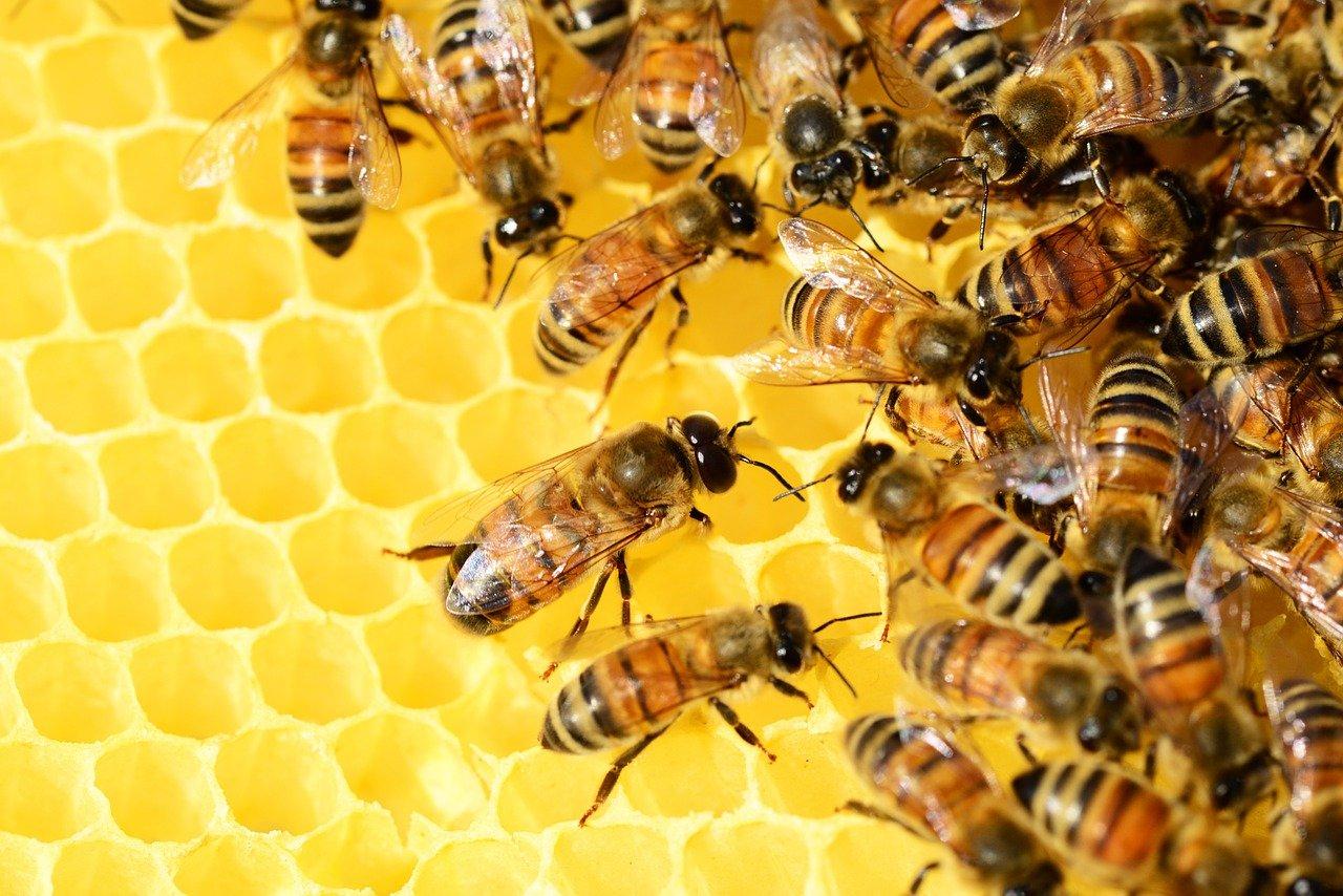 Śmiertelna zaraza w powiecie bełchatowskim. Trzeba będzie wybijać całe rodziny pszczół? - Zdjęcie główne