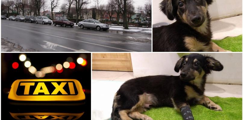 Szczeniaczek wpadł pod auto, uratował go taksówkarz - Zdjęcie główne