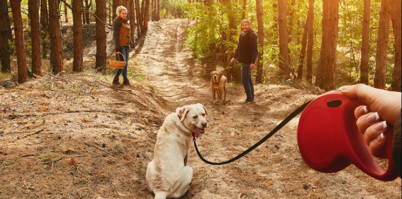 Opłata od posiadania psów. Ile w Gostyninie? - Zdjęcie główne