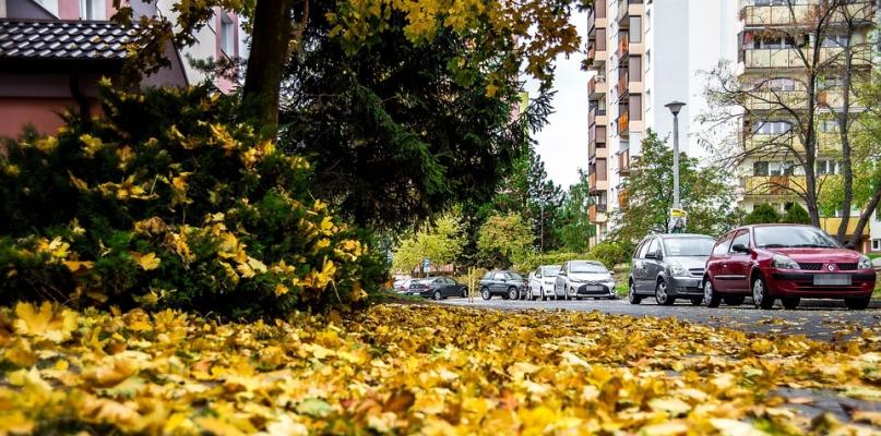 Jesień na drogach. Policja apeluje o ostrożność  - Zdjęcie główne