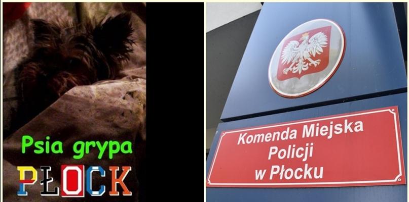 Psia grypa opanowała policyjne komendy, również płocką - Zdjęcie główne