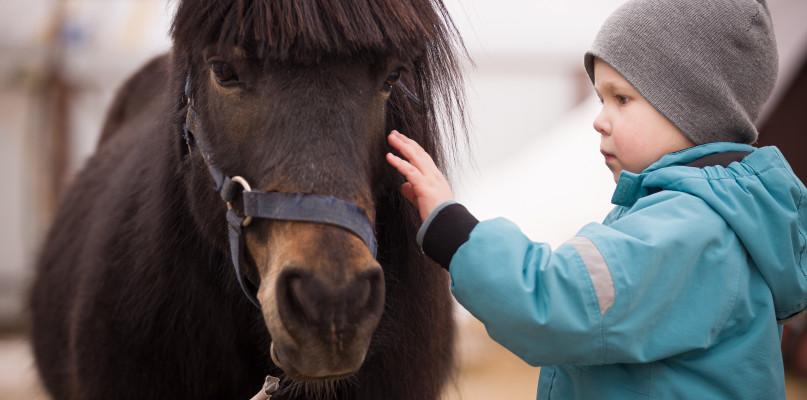 Terapeutyczna moc koni – odkrywamy sekrety hipoterapii - Zdjęcie główne
