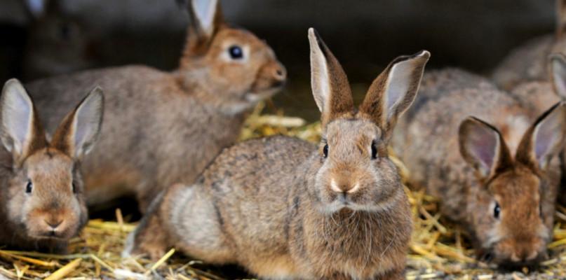 Myślisz o hodowli królików? To świetny pomysł! - Zdjęcie główne
