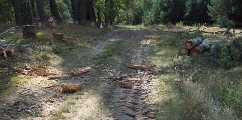 Krajobraz jak po orkanie: wycięli drzewa, posprzątać musiał mieszkaniec - Zdjęcie główne