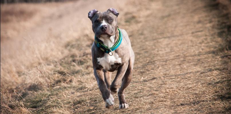 Właściciele psów muszą uważać. Kary są już dużo wyższe - Zdjęcie główne