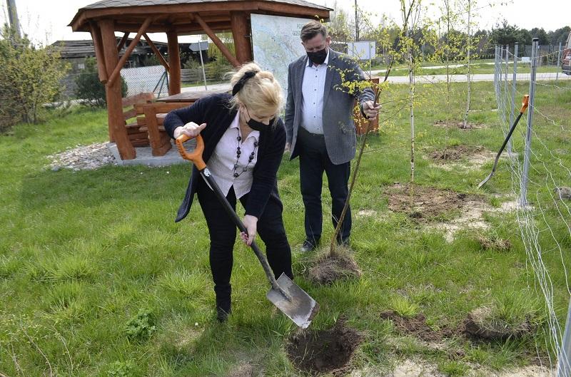 Władze powiatu sadziły drzewa... - Zdjęcie główne