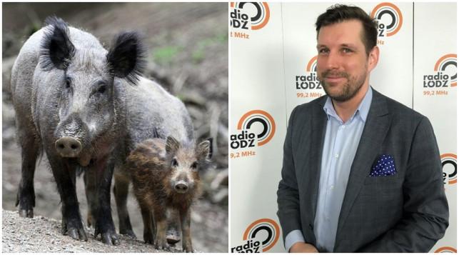 Wojewoda postanowił: Myśliwi zastrzelą ponad 3 tysiące dzików! Ile w naszym powiecie? - Zdjęcie główne