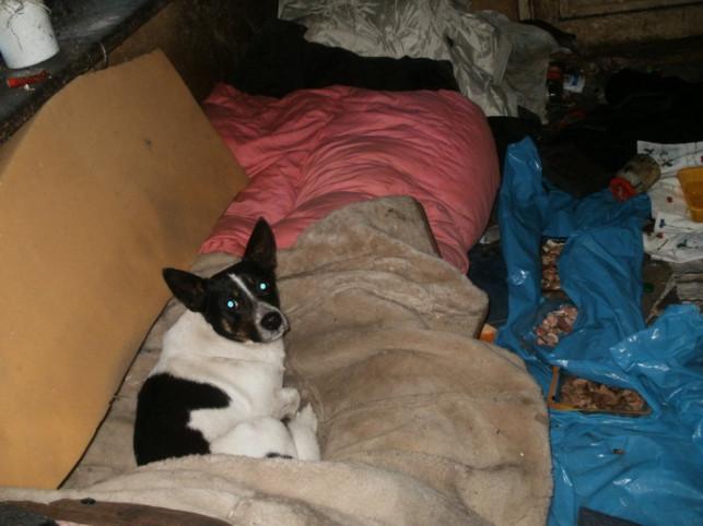 Misio szuka nowego domu! - Zdjęcie główne