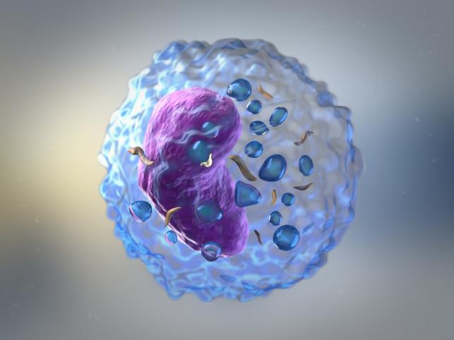 Jaką rolę pełnią limfocyty? - Zdjęcie główne