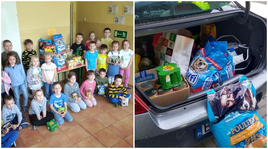Bagażnik pełen prezentów. Dzieciaki z kutnowskiego przedszkola wspierają bezpańskie zwierzęta [ZDJĘCIA] - Zdjęcie główne