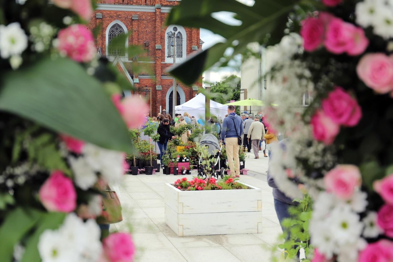 [ZDJĘCIA] Kiermasz Różany i wyjątkowa wystawa w pawilonie. Plac Wolności tętni życiem!  - Zdjęcie główne