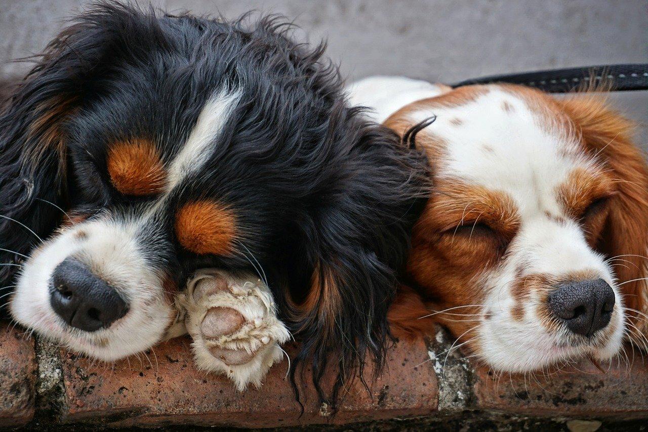 """Coraz mniej zwierzaków z Kutna w schronisku: """"Takich efektów nie byłoby bez ludzi dobrej woli"""" - Zdjęcie główne"""