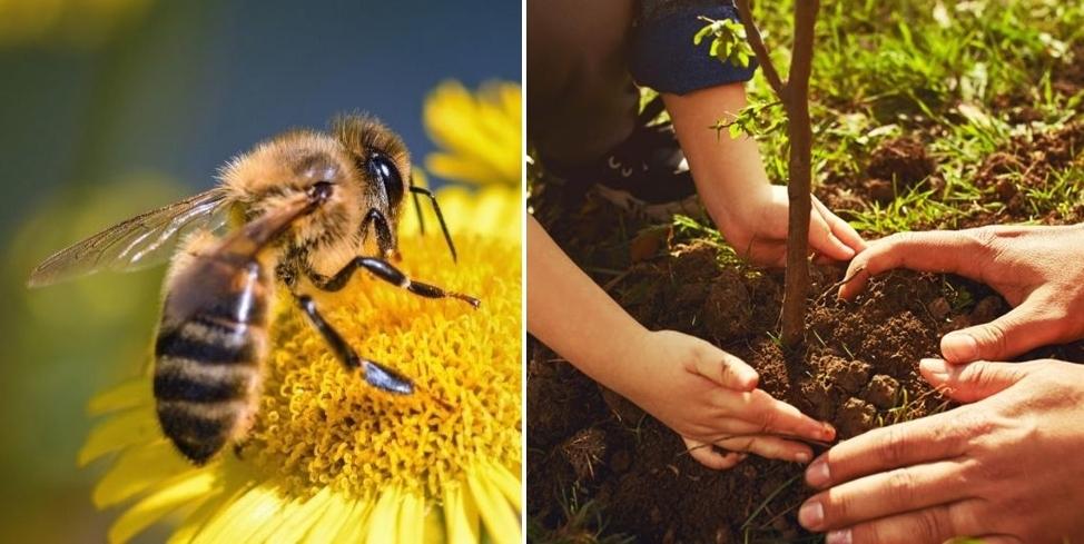 Kutno przyjazne pszczołom? Mieszkańcy apelują o nasadzenia drzew i krzewów miododajnych - Zdjęcie główne
