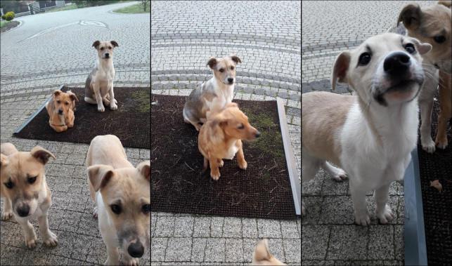 Wyrzucił szczeniaki, a ich matkę przywiązał do drzewa - Zdjęcie główne