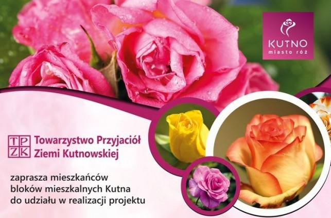 Sadzimy róże małe i duże - Zdjęcie główne