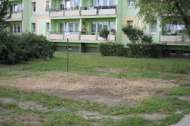 Mieszkańcy pytają: Kto jest odpowiedzialny za koszenie miejskich trawników? - Zdjęcie główne