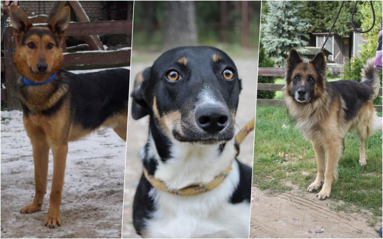 [FOTO] Kilkadziesiąt psów z Kutna w schronisku. Urząd zachęca mieszkańców do adopcji - Zdjęcie główne