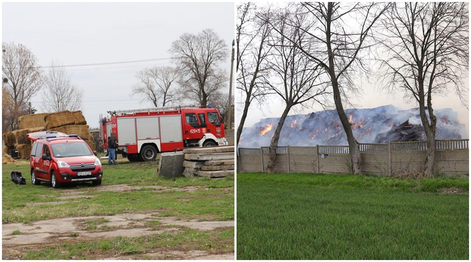 [ZDJĘCIA] Pożar w powiecie kutnowskim. To prawdopodobnie podpalenie  - Zdjęcie główne