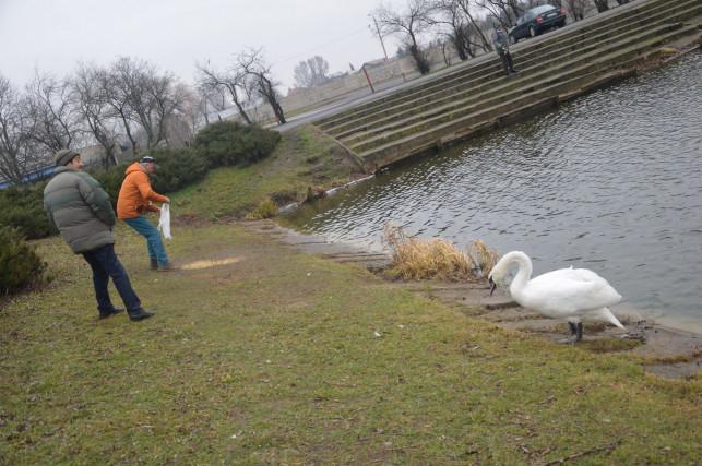 Tomi i Roxi władają zalewem przy Narutowicza - Zdjęcie główne