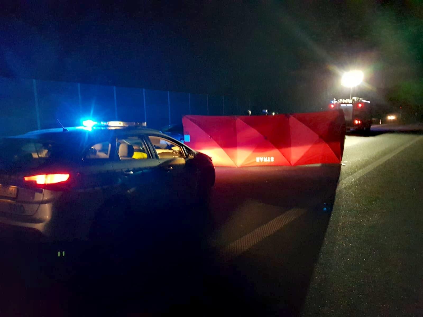 [FOTO] Samochód uderzył w łosia na autostradzie pod Kutnem. Nie żyje jedna osoba - Zdjęcie główne