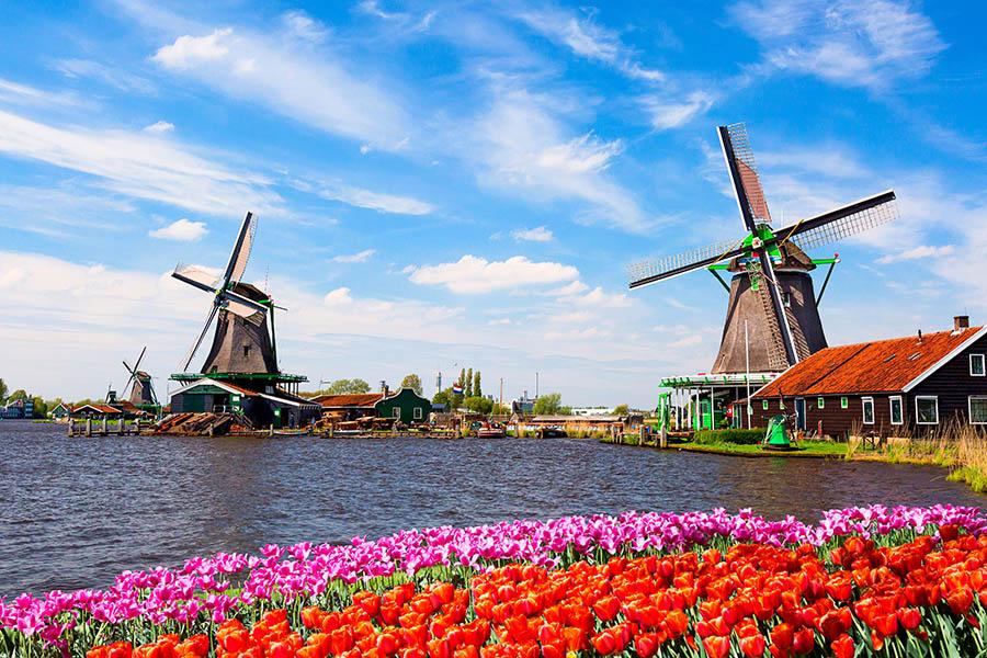 Własny sklep internetowy w Holandii. - Zdjęcie główne