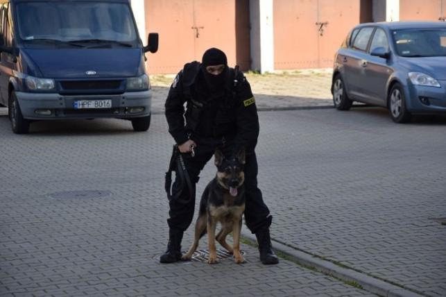 Morderstwo w Płocku. W zatrzymaniu podejrzanego pomógł… policyjny pies z Kutna - Zdjęcie główne