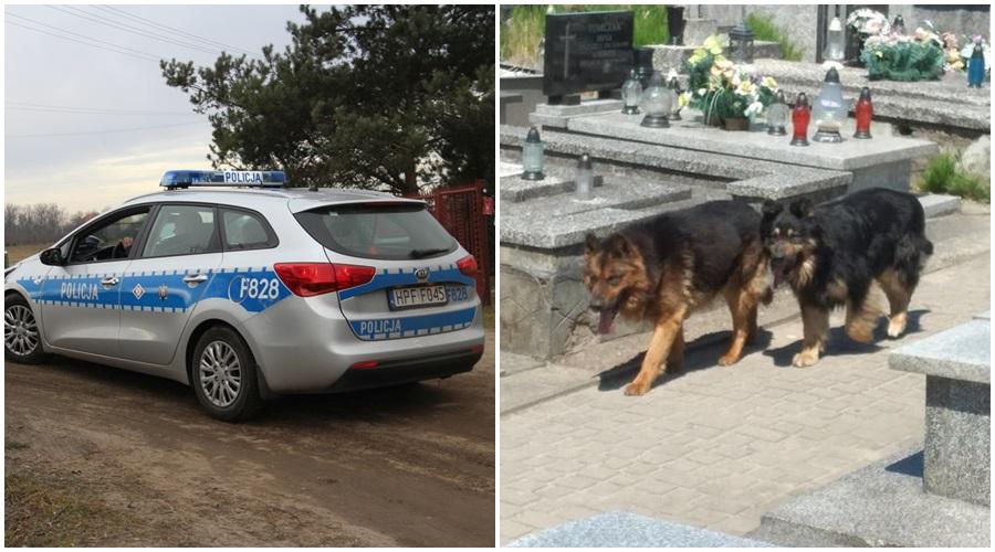 Psy pogryzły kilka osób na cmentarzu w Żychlinie. Znamy więcej faktów [ZDJĘCIA] - Zdjęcie główne