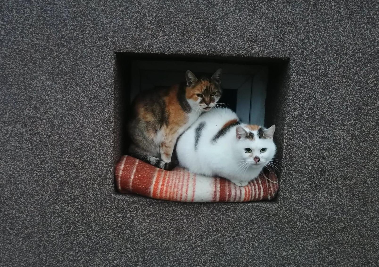 Karma, weterynarz i dach nad głową: Miasto pomaga bezdomnym kotom  - Zdjęcie główne