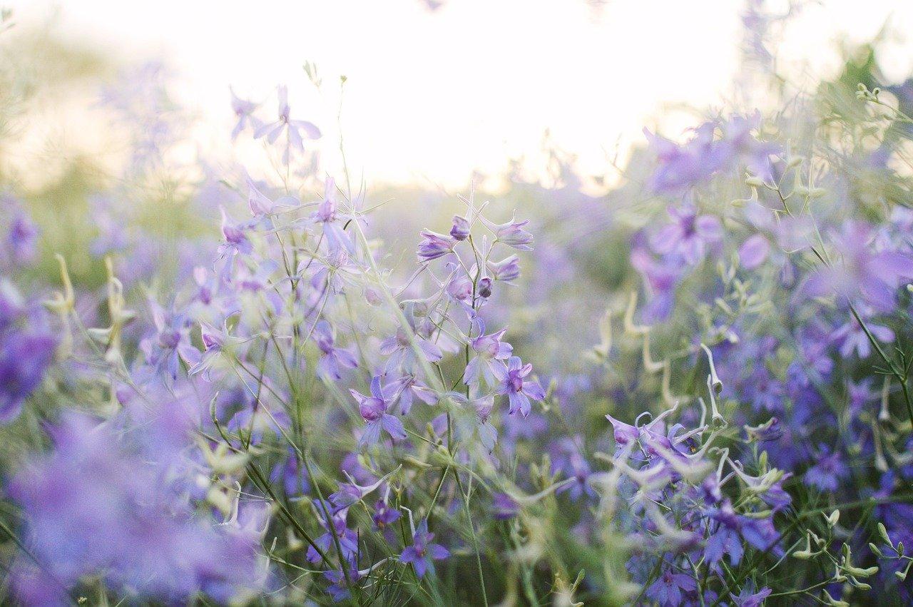 Kwieciste motywy na tapetach oraz plakatach - aby wiosna już zawsze była z Tobą! - Zdjęcie główne