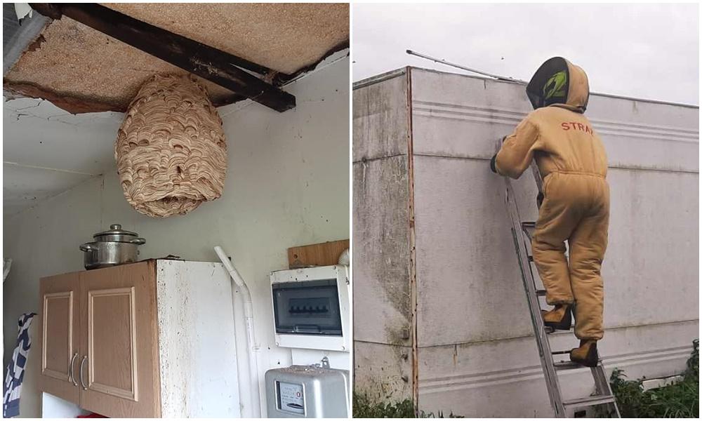Gigantyczne gniazdo szerszeni w powiecie kutnowskim! Strażacy w akcji [ZDJĘCIA] - Zdjęcie główne
