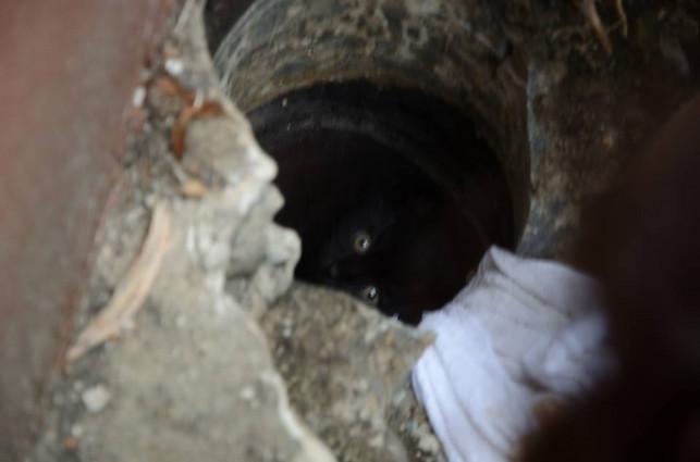 Łęczycka Straż miejska na pohybel znieczulicy – uratowała małego kotka - Zdjęcie główne