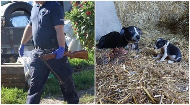 [ZDJĘCIA] Broń w słomie, martwe i częściowo zakopane psy. Akcja policji - Zdjęcie główne